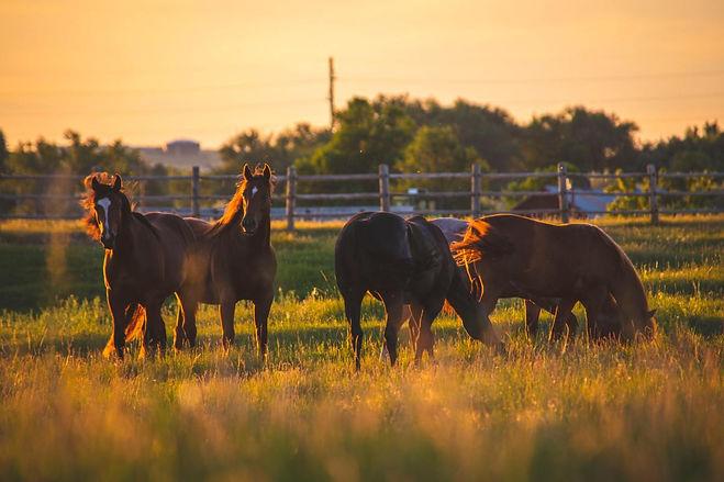 Farm Ranch Image (1).jpg