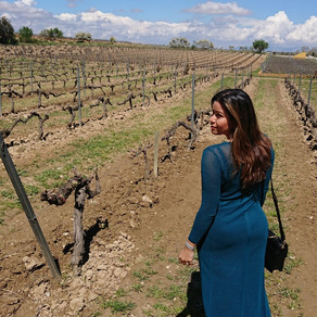 Penedes, heaven for lovers of wine