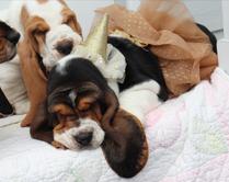 Ellas Puppies