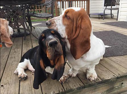 Bear and Clover (Winnie&Garth Pup)