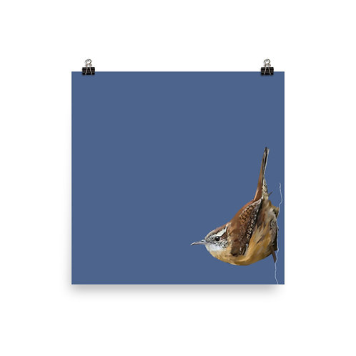 Carolina Wren - Square Bird Art Print