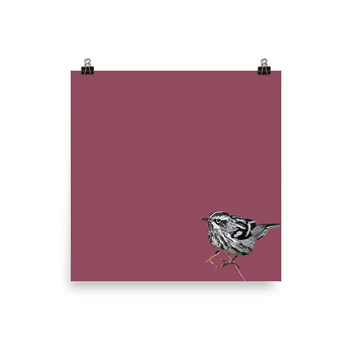 Black and White Warbler - Square Bird Art Print