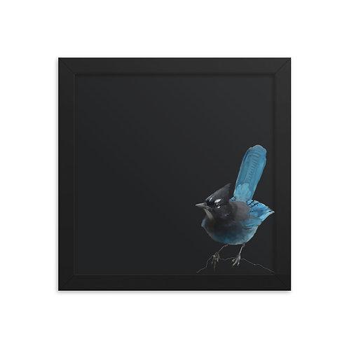 Steller's Jay - Framed Bird Art Print