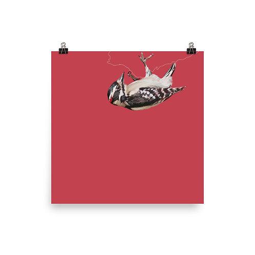 Downy Woodpecker - Square Bird Art Print