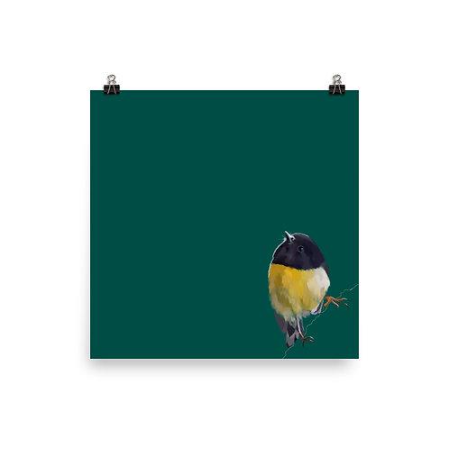 Tomtit - Square Bird Art Print