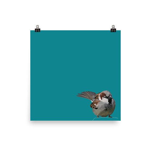House Sparrow - Square Bird Art Print