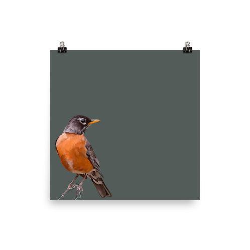 American Robin - Square Bird Art Print