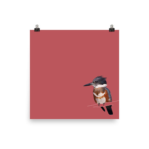 Belted Kingfisher - Square Bird Art Print