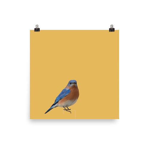 Eastern Bluebird - Square Bird Art Print