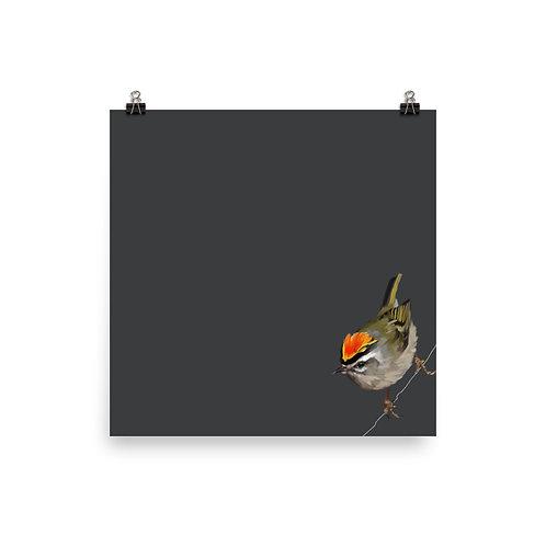 Golden-Crowned Kinglet - Square Bird Art Print