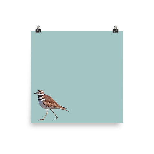 Killdeer - Square Bird Art Print