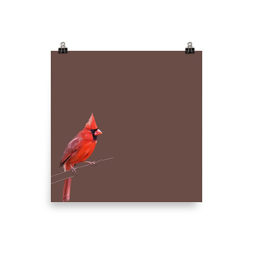 Male Northern Cardinal - Square Bird Art Print