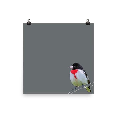 Rose Breasted Grosbeak - Square Bird Art Print