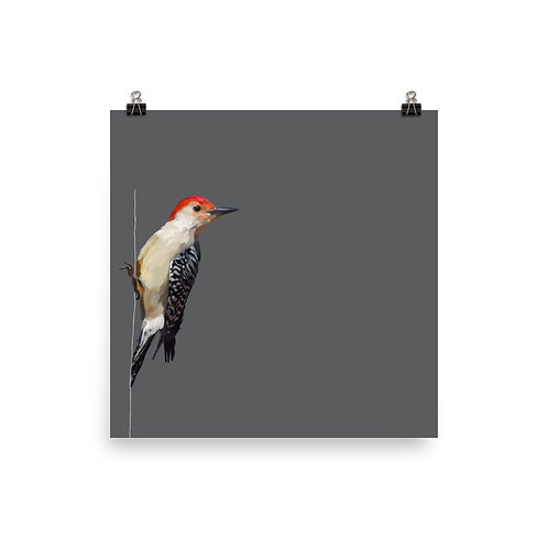 Red-Bellied Woodpecker - Square Bird Art Print