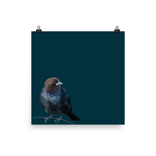 Brown Headed Cowbird - Square Bird Art Print