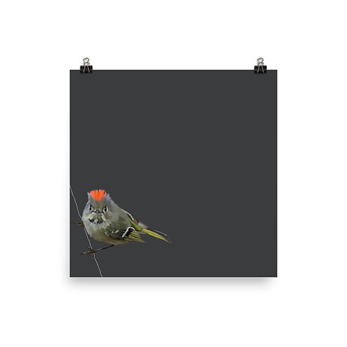 Ruby-Crowned Kinglet - Square Bird Art Print