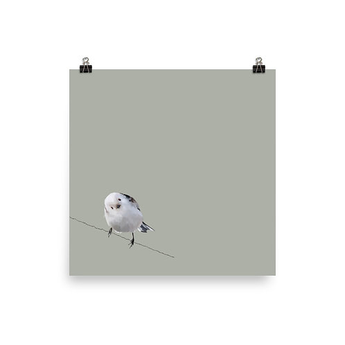 Japanese Long-Tailed Tit - Square Bird Art Print