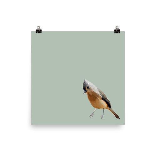Tufted Titmouse - Square Bird Art Print