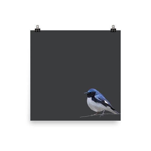 Black-Throated Blue Warbler - Square Bird Art Print