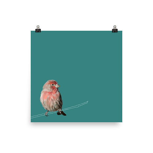 House Finch - Square Bird Art Print