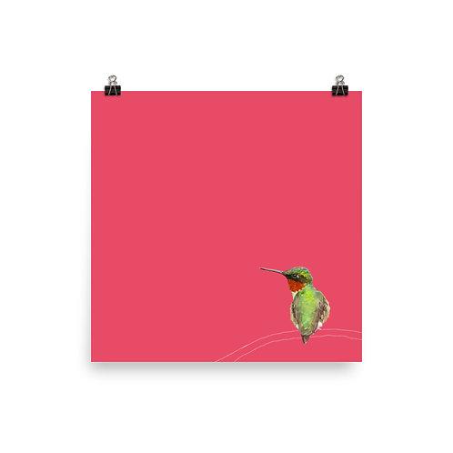 Red Throated Hummingbird - Square Bird Art Print
