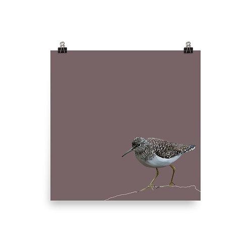 Solitary Sandpiper - Square Bird Art Print