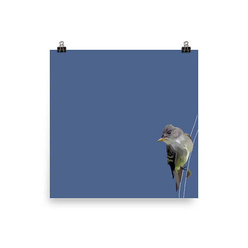 Least Flycatcher - Square Bird Art Print