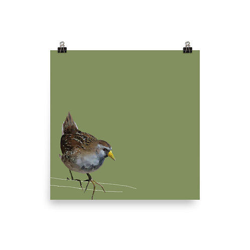 Sora - Square Bird Art Print