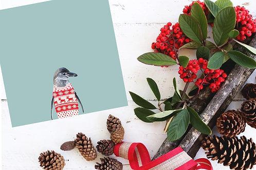 Humboldt Penguin Holiday Card