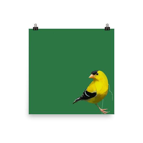 American Goldfinch - Square Bird Art Print