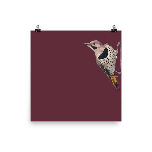 Northern Flicker - Square Bird Art Print