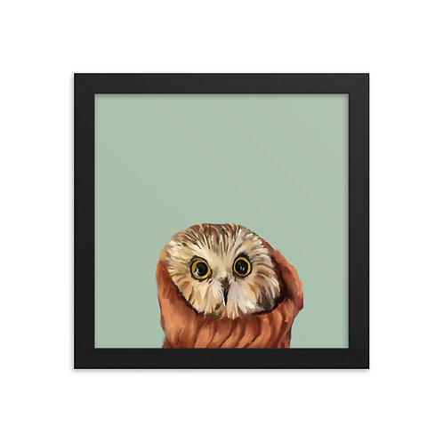 The Northern Saw-Whet  Owl - Framed Bird Art Print