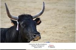 CONC DE REC ALAGON JUNIO 2016 (3)