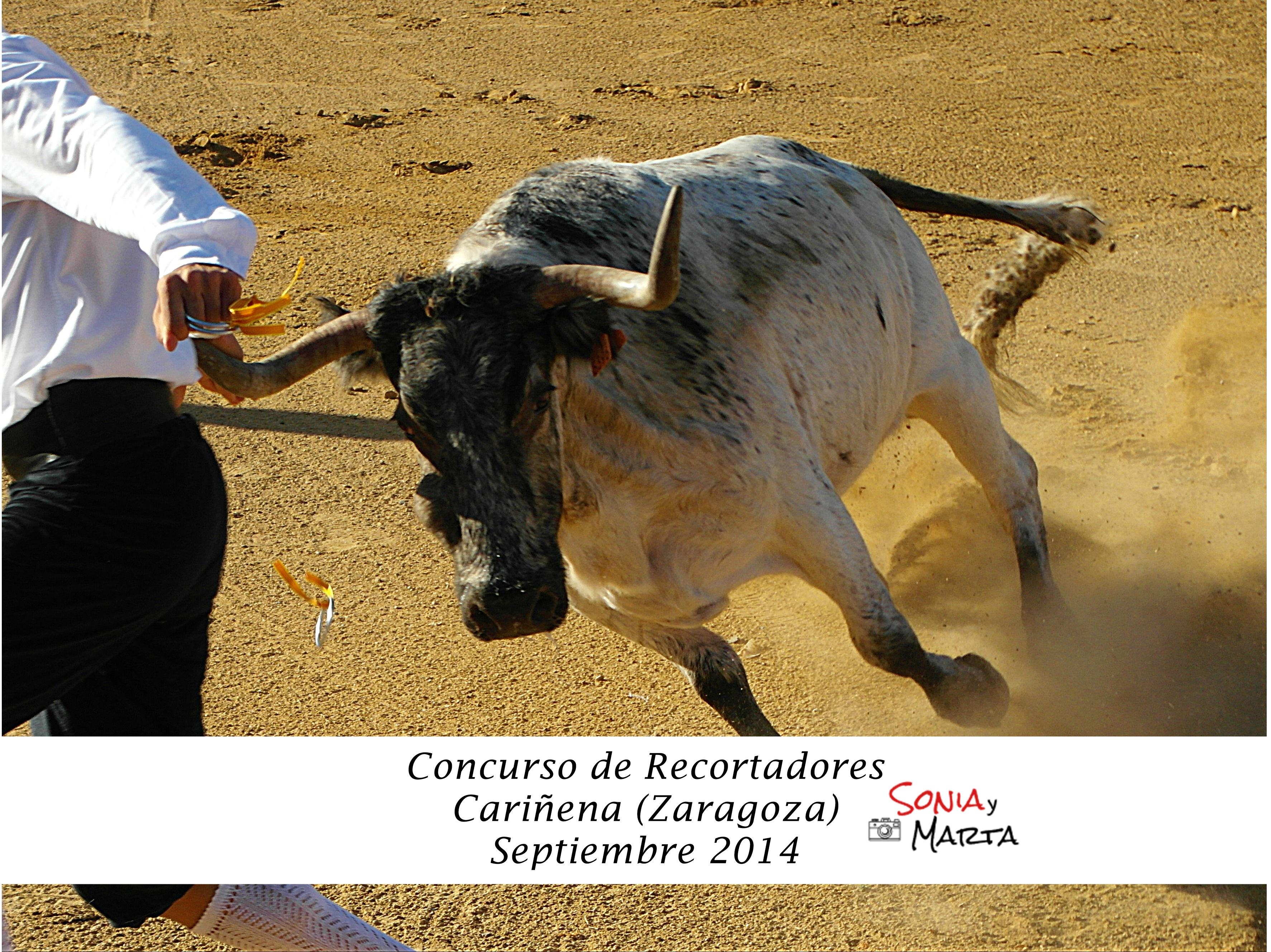 CONCURSO_DE_REC_CARIÑENA_SEPTIEMBRE_201