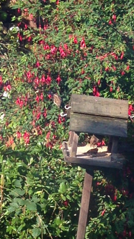 Birds loving the garden after rain