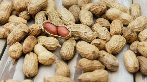 Pindakaas: Is het gezond of ongezond?