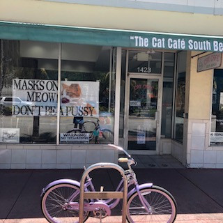 The Cat Cafe South Beach: Emblem of Defeat or Reinvention?