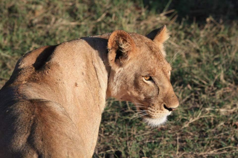 safari Kenya.jpg.jpg