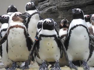 桃園に新観光スポット誕生! 台湾初の都市型水族館「Xpark」がまもなく開業