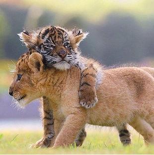 kitties.jpeg