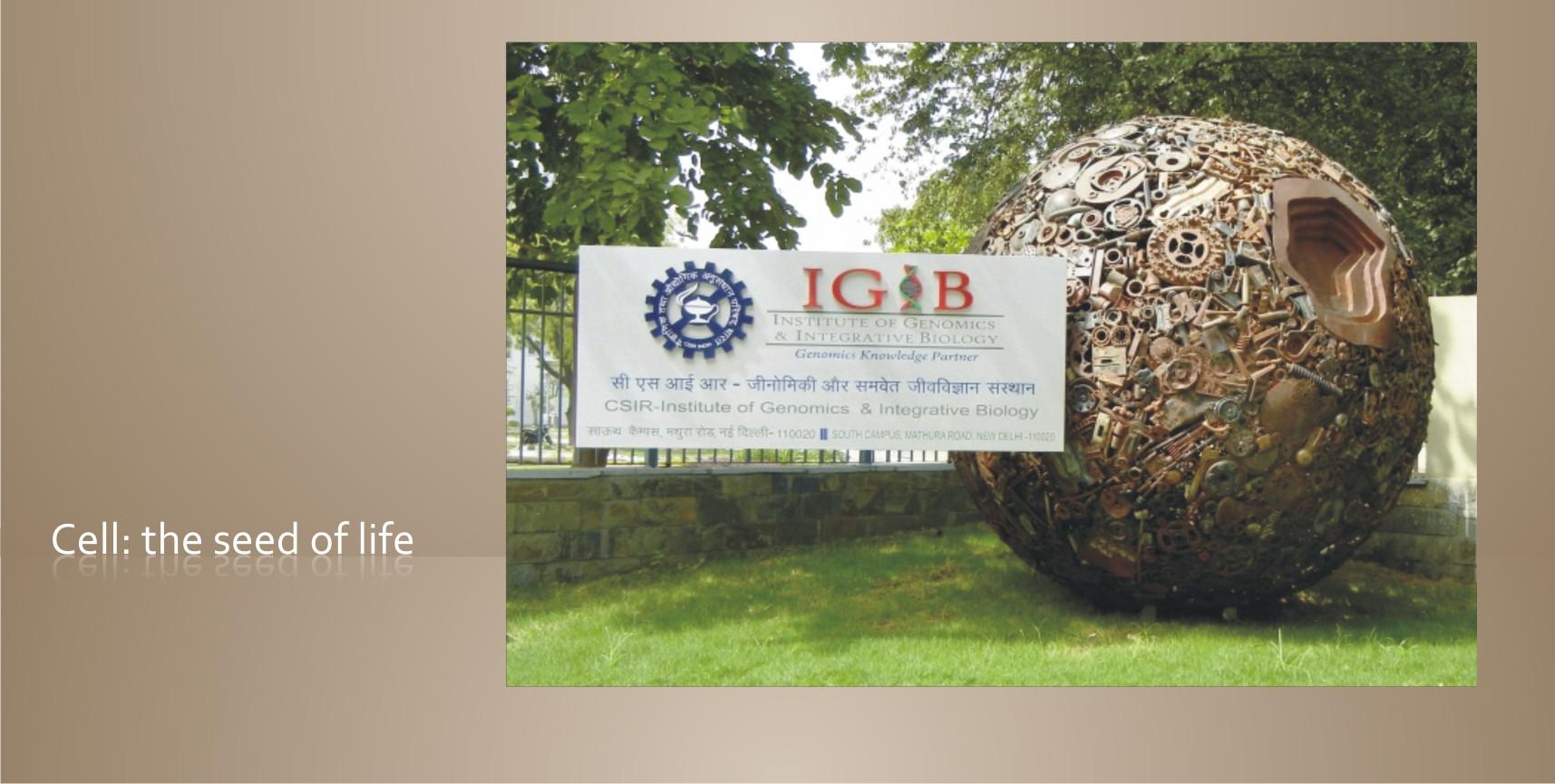 IGIB new p5.jpg