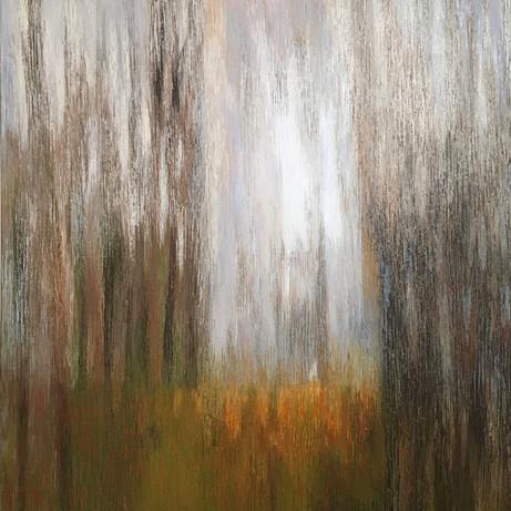 A Walk in Woods 4