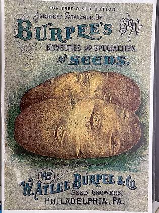 Burpee's Potatoes A3