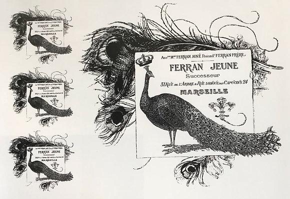 Ferran Jeune