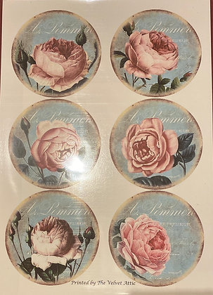 Pink Roses A4