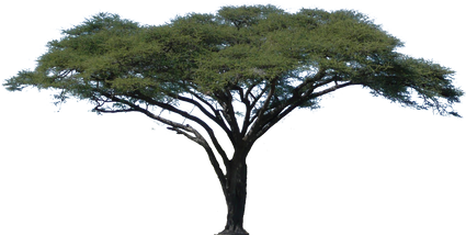 1131155_african-tree-png.png