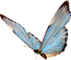 blue-butterfly-png-7.png
