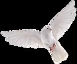 transparent-dove-god-1.png