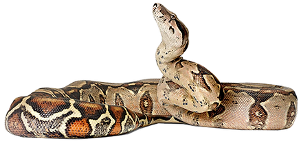 photo abc snake.png