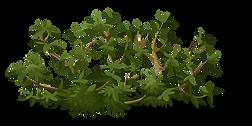 bush-575516_960_720.png